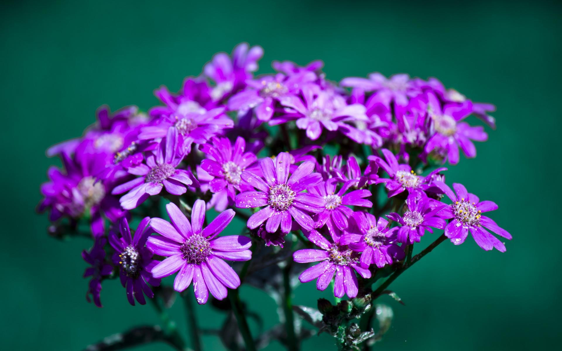 春的花,开半夏作文