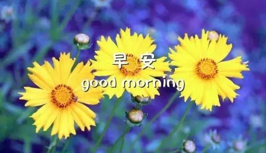 早安问候一句话精辟|非常精辟的早安心语正能量语语录大全