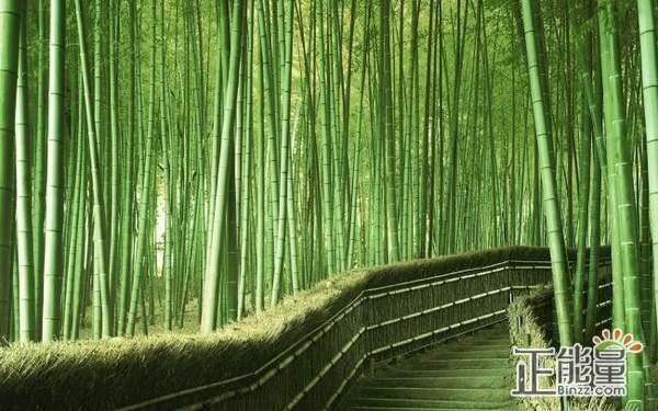 美文欣赏:竹林的深处