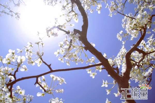 心灵鸡汤经典澳门金沙在线娱乐官网语录:阳光正好,又是崭新的一天