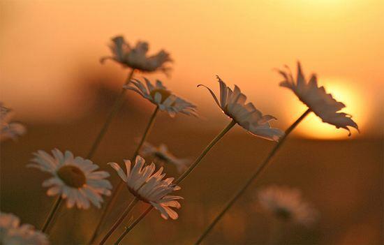 一句话正能量心灵鸡汤语录:你优秀了,自然有对的人与你并肩