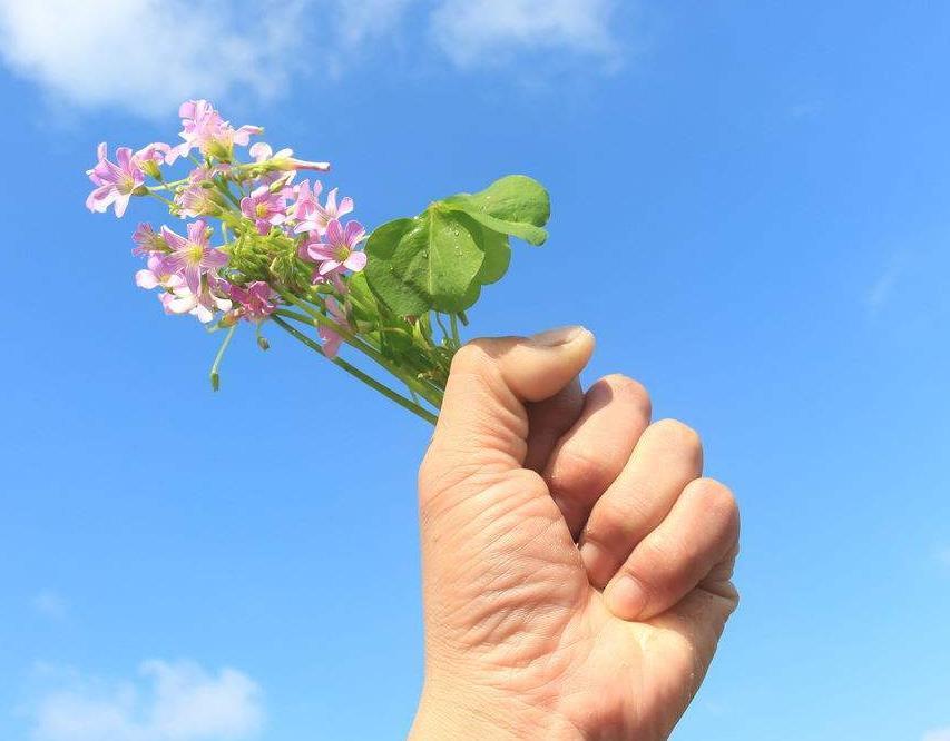 工作努力上进励志经典语录:命运是掌握在自己手里的