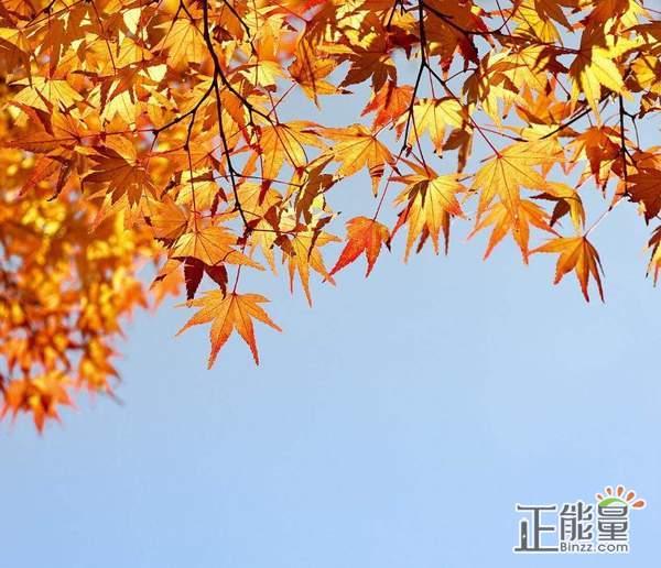 秋分节气问候语:秋分节气说说心情短语