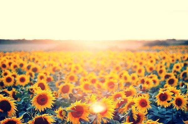 李娟遥远的向日葵地读后感:用心活,活在当下