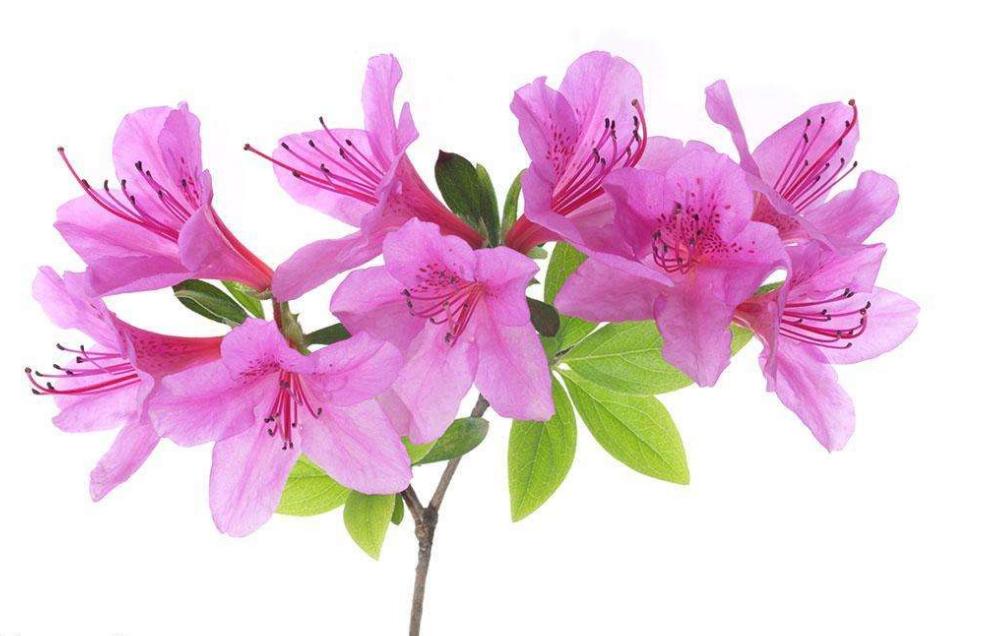春花宴诗词作文