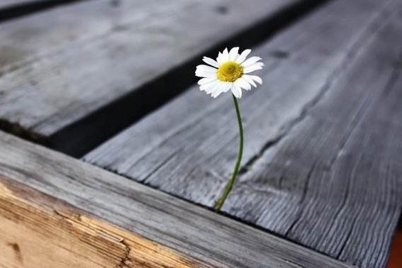 人生感悟经典句子:一首歌因为经得起时间的流逝,所以才奉为经典