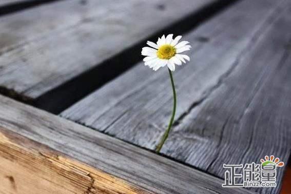 关于人生哲理的经典语录:生活是一面镜子,你的心怎么样,生活就怎么样。