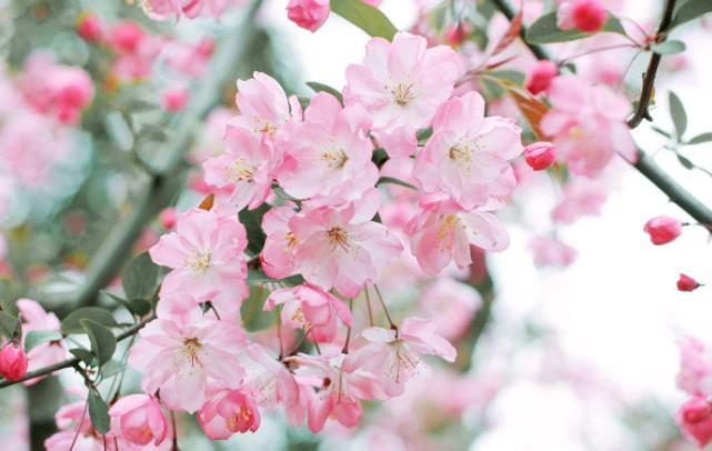 关于春天的经典句子