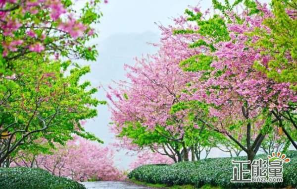 关于春天的优美句子:踏进这淡蓝色的烟雨,在这雨季,你为我撑出的一片无雨的天地。
