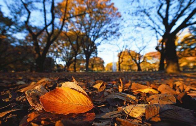 关于秋天的优美句子