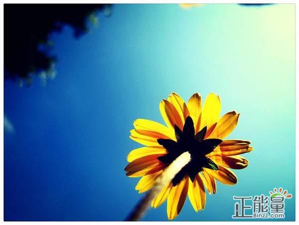 人生感悟的句子带图片:得与失永远是正比的。