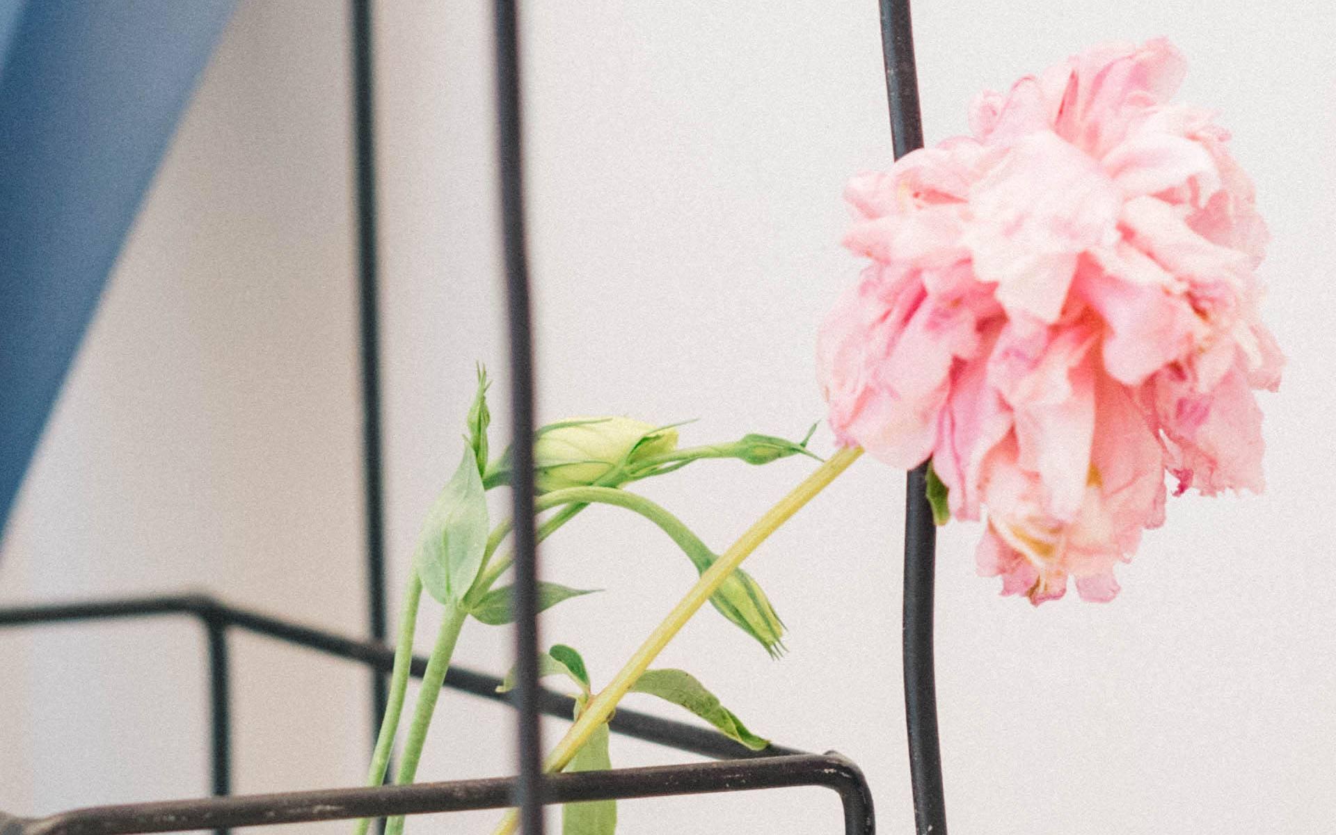 午安心语正能量优美的句子:每一次的蜕变都会有成长的惊喜