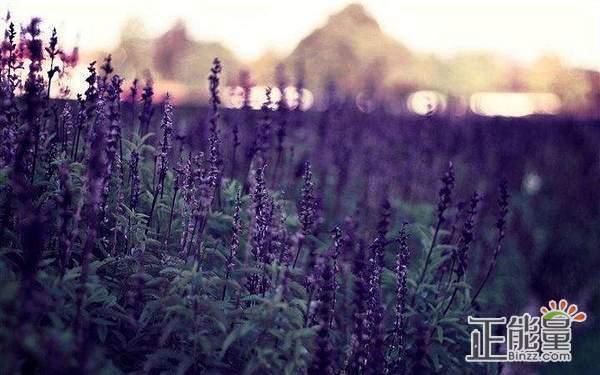 一句阳光励志的心情说说句子:人活着是一件多么美妙之事