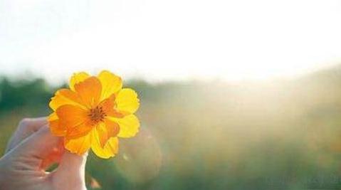 朋友圈早晨问候语励志|清晨问候语励志每日早晨正能量语录大全