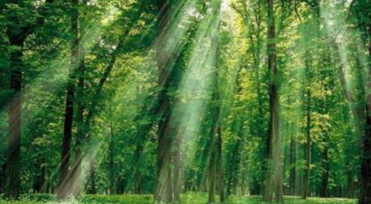 感悟森林伐木的时光经典诗句