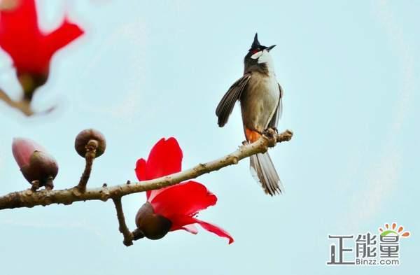 春鸟读后感书评欣赏1000字
