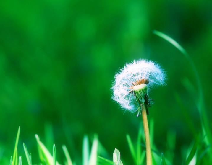 重新开始的句子励志心情语录说说:追梦的路上永不停歇