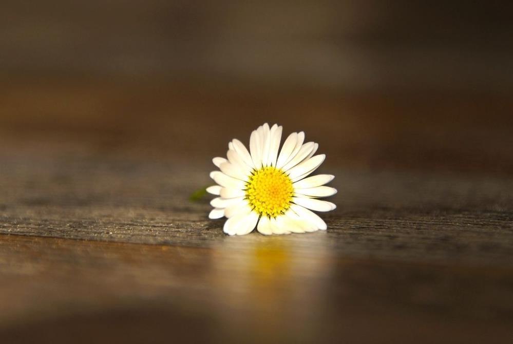 用心体会生活感悟人生的经典句子说说:别担心,一起都会好起来的