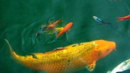 回家的鱼儿抒情散文欣赏