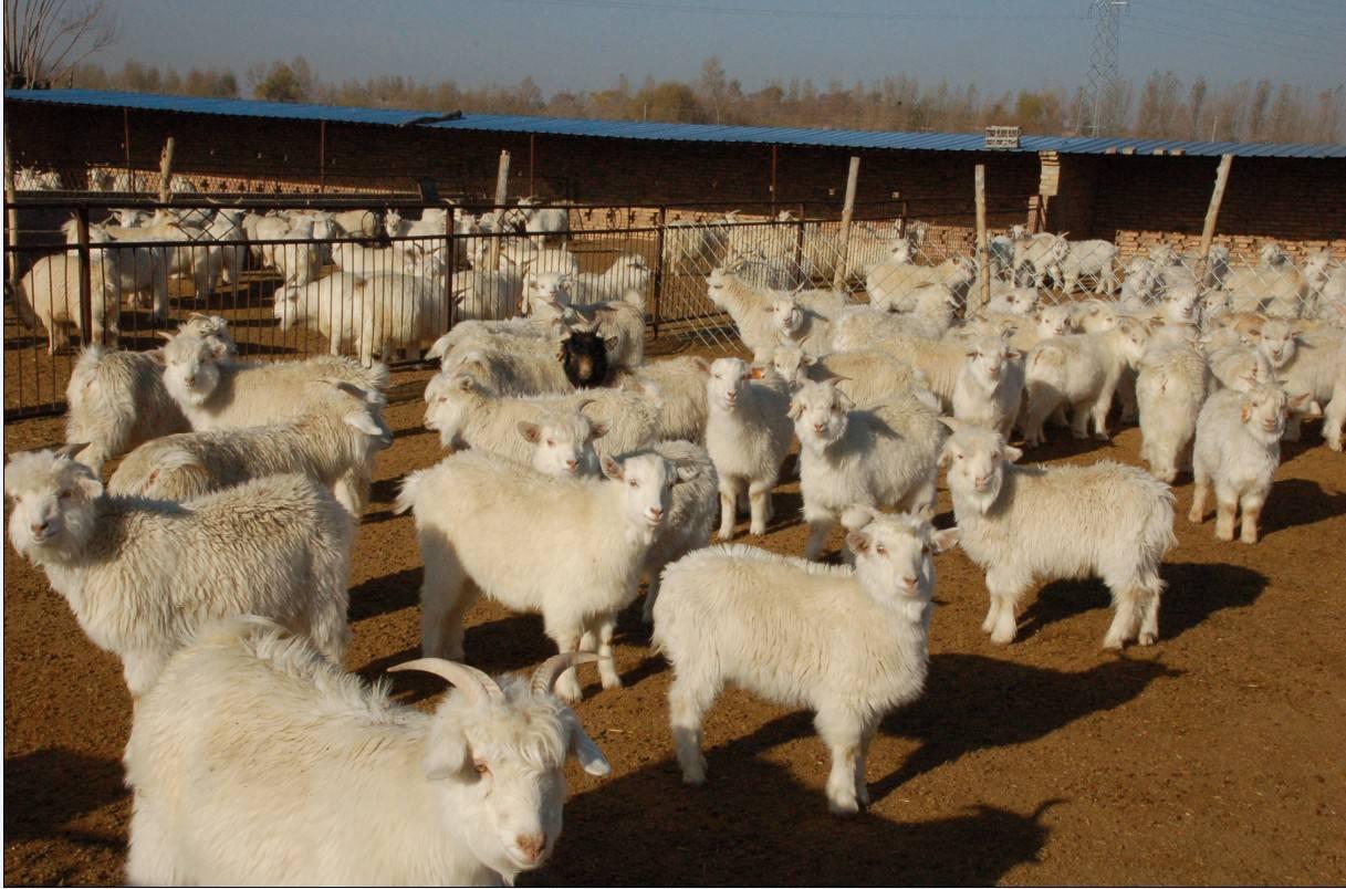 畜牧业协会2018年工作总结与2019年工作要点
