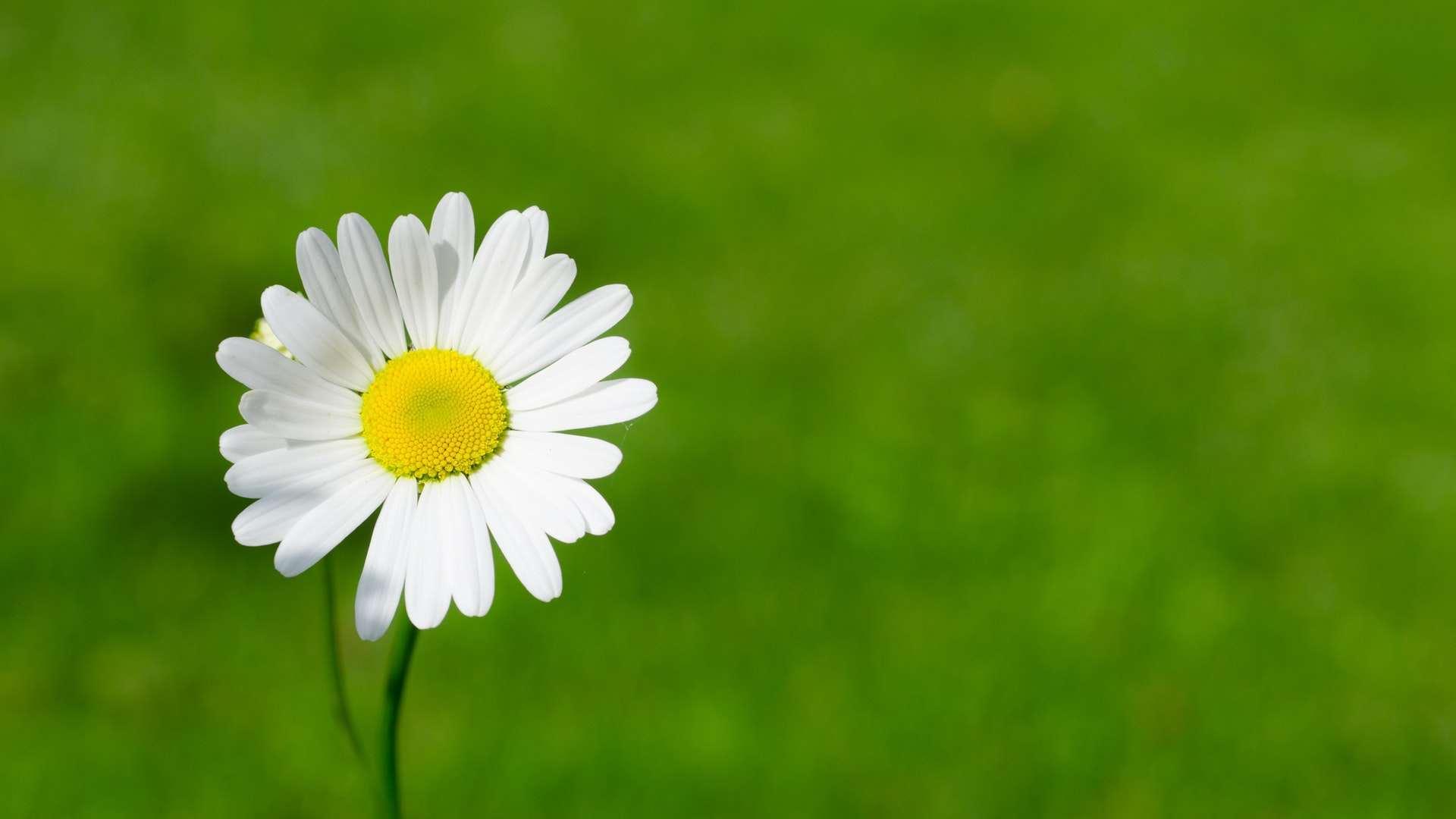 今天的付出只为明天正能量语录说说:你会成为别人生命中的光
