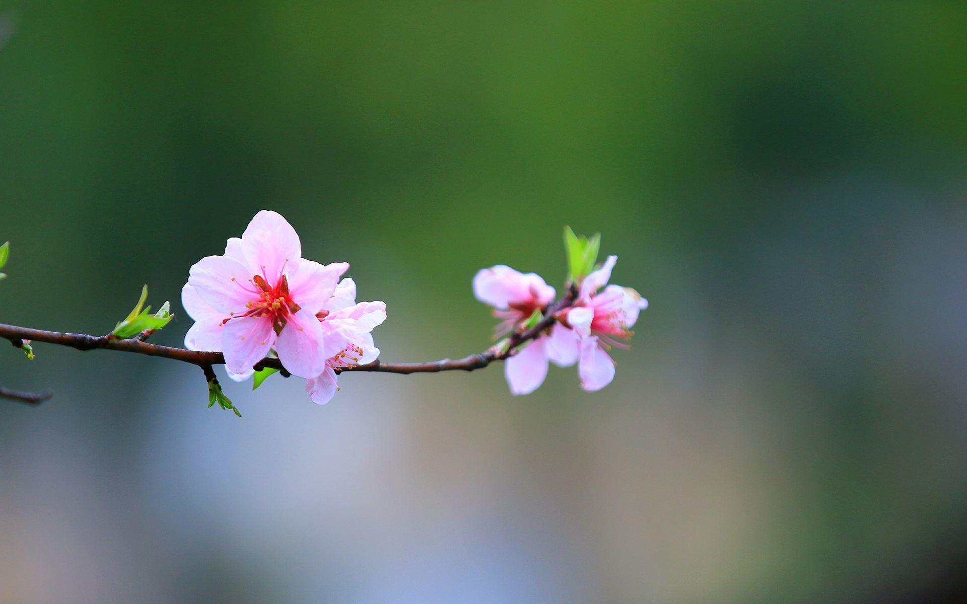 成为自己想成为的人感悟人生语录:尘土,也能开出花来
