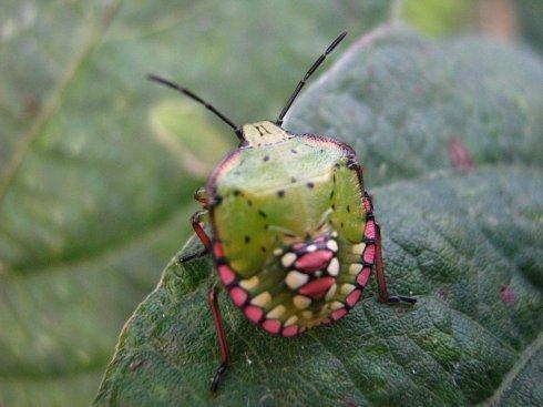 秋天的昆虫五年级作文500字
