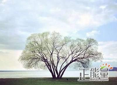 站成一棵树作文600字