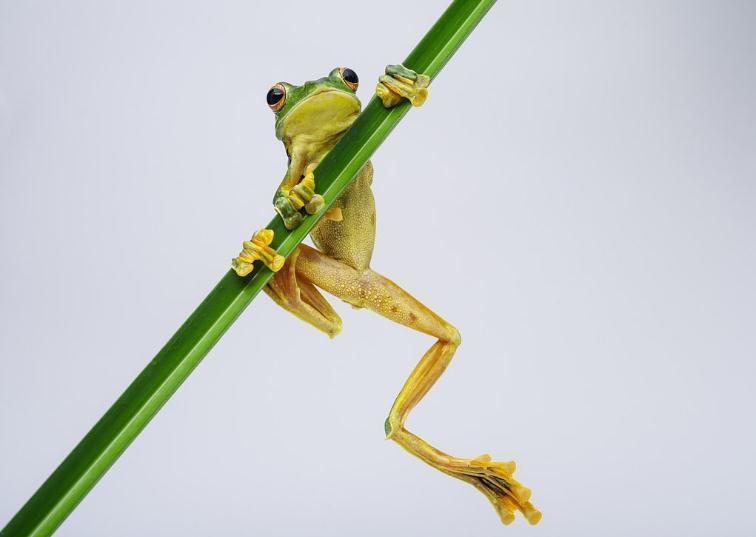 关于动物描写的作文:青蛙逃跑记