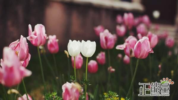 人要学会坚强的句子正能量说说:学会坚持不放弃的人