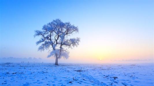 关于冬雪的优美散文欣赏:雪落倾城不需言