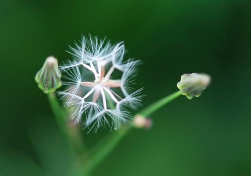 岁月感慨的说说心情回忆过去的短语:往事莫回首,回首亦是空
