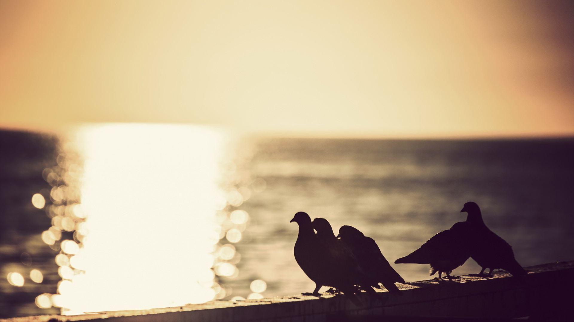 心向阳光正能量的句子简短澳门威尼斯人在线娱乐