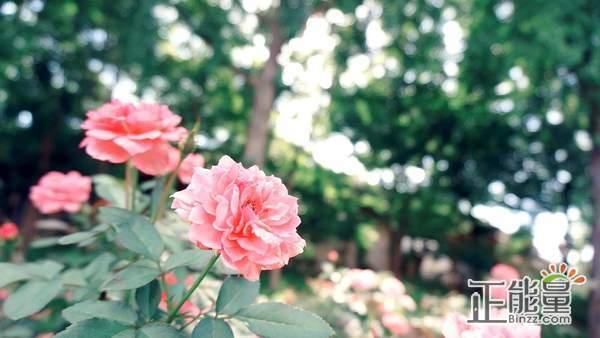 早安心语简单一句话致自己:愿你笑里是坦荡,眼里是阳光