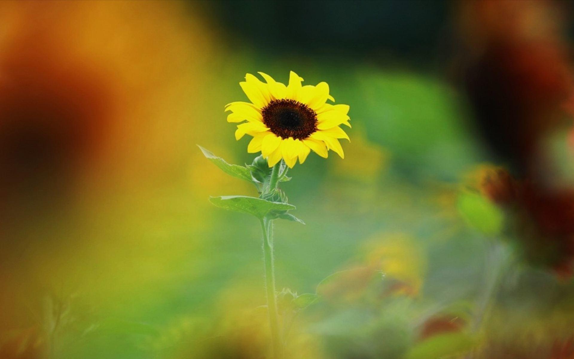 一生无悔的句子说说正能量语录:保持对生活的希望,不要投降