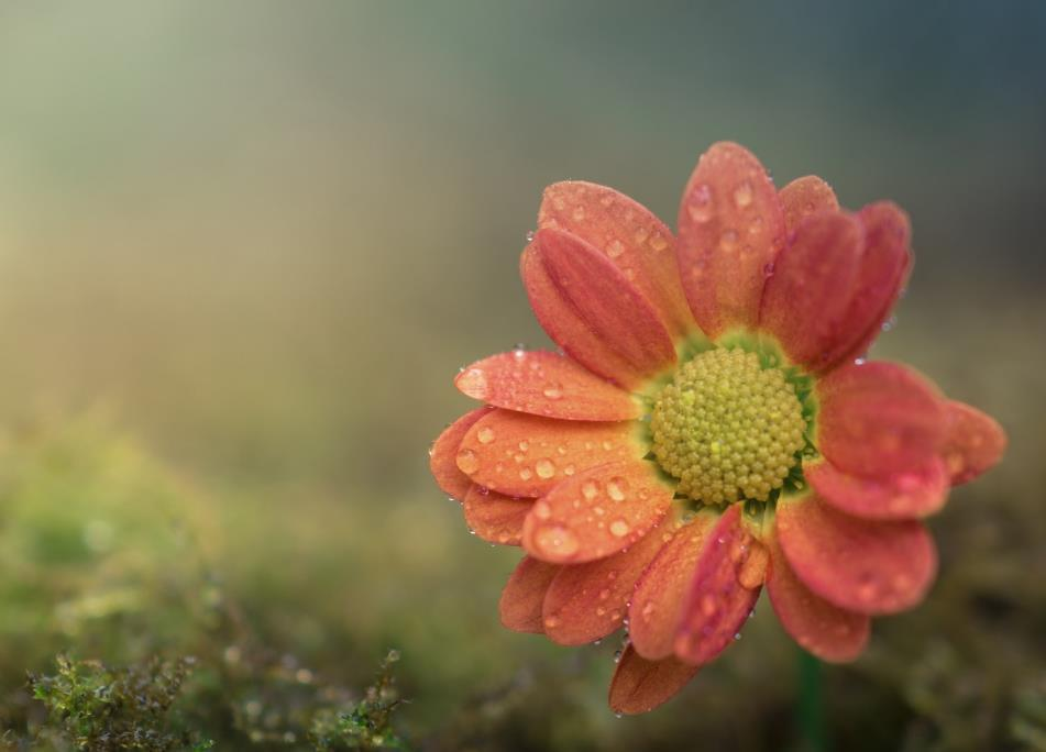 习惯一个人的伤感句子说说:去做一个开心随性的人