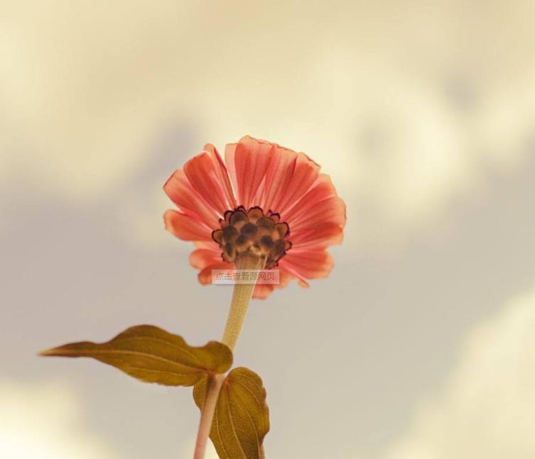 爱是付出不是占有的情感语录说说:请你往自己的梦想努力奔去吧