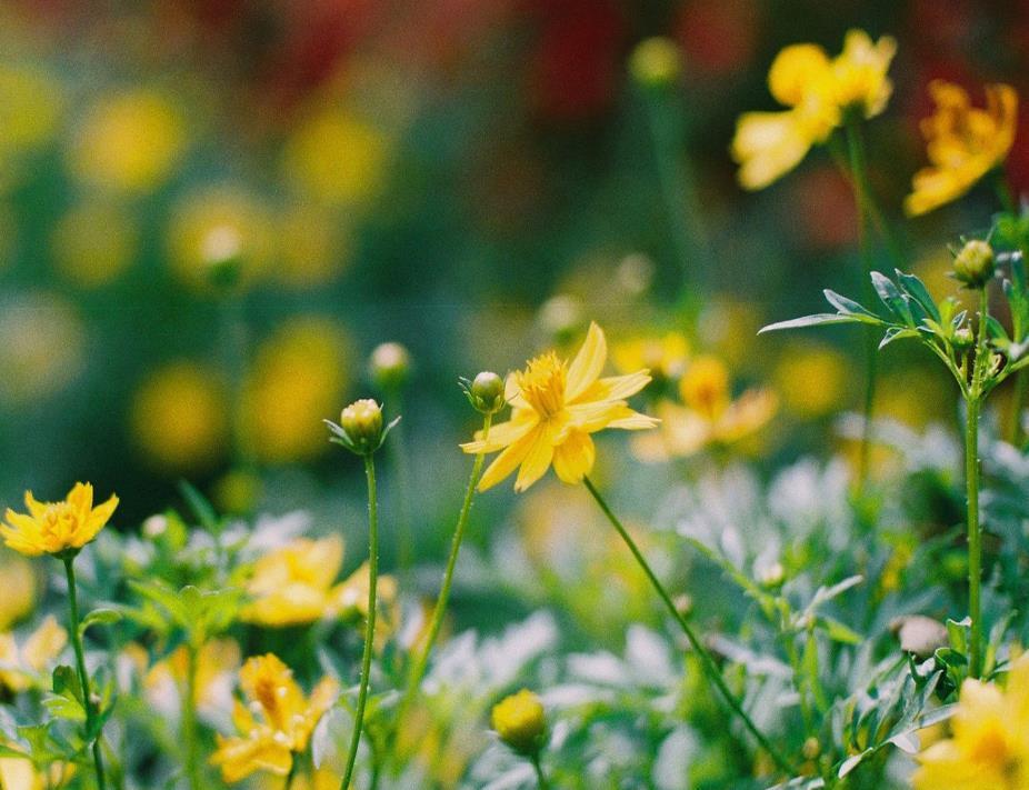 成长的句子说说心情人生感悟:成长,就是不停地否定曾经的自己