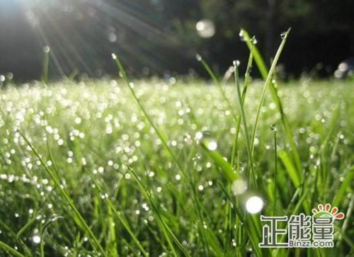 关于春雨抒情文章散文欣赏