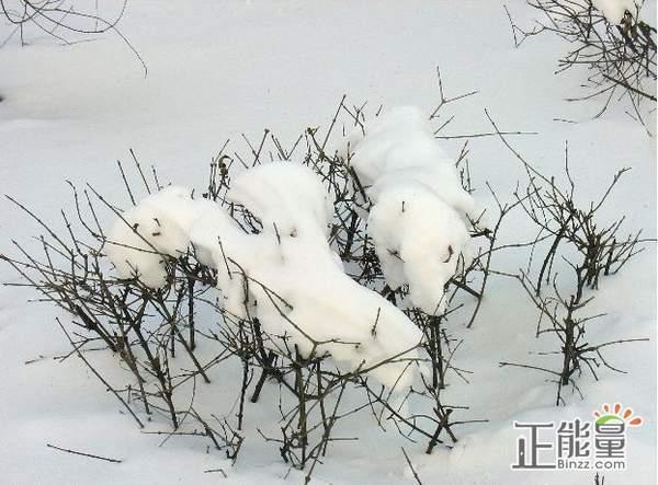 飘雪的春天美文欣赏散文文章