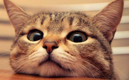 猫不可貌相五年级优秀作文500字动物作文