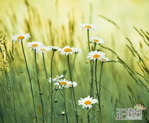 努力的句子正能量说说心情语录:余生很长,请别浪费