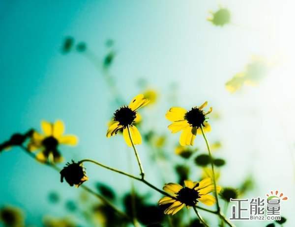 追求理想生活的阳光正能量语录:不忘初心,坚持下去