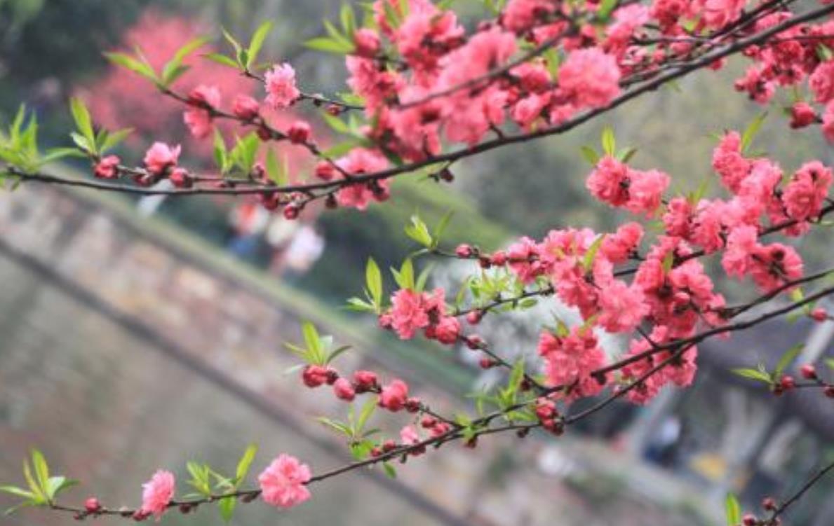 关于寻找春天话题作文精选6篇