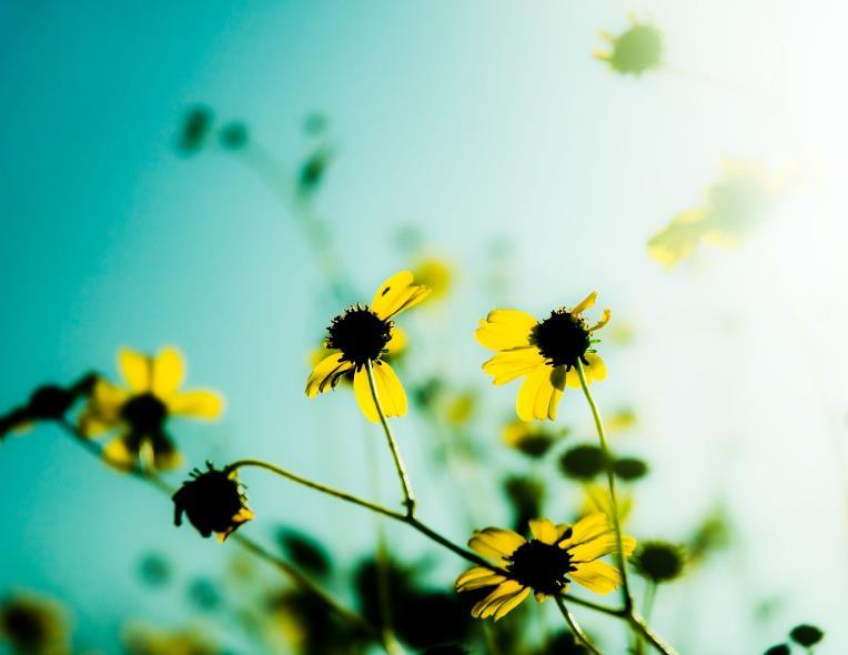 追求理想生活的陽光正能量語錄:不忘初心,堅持下去