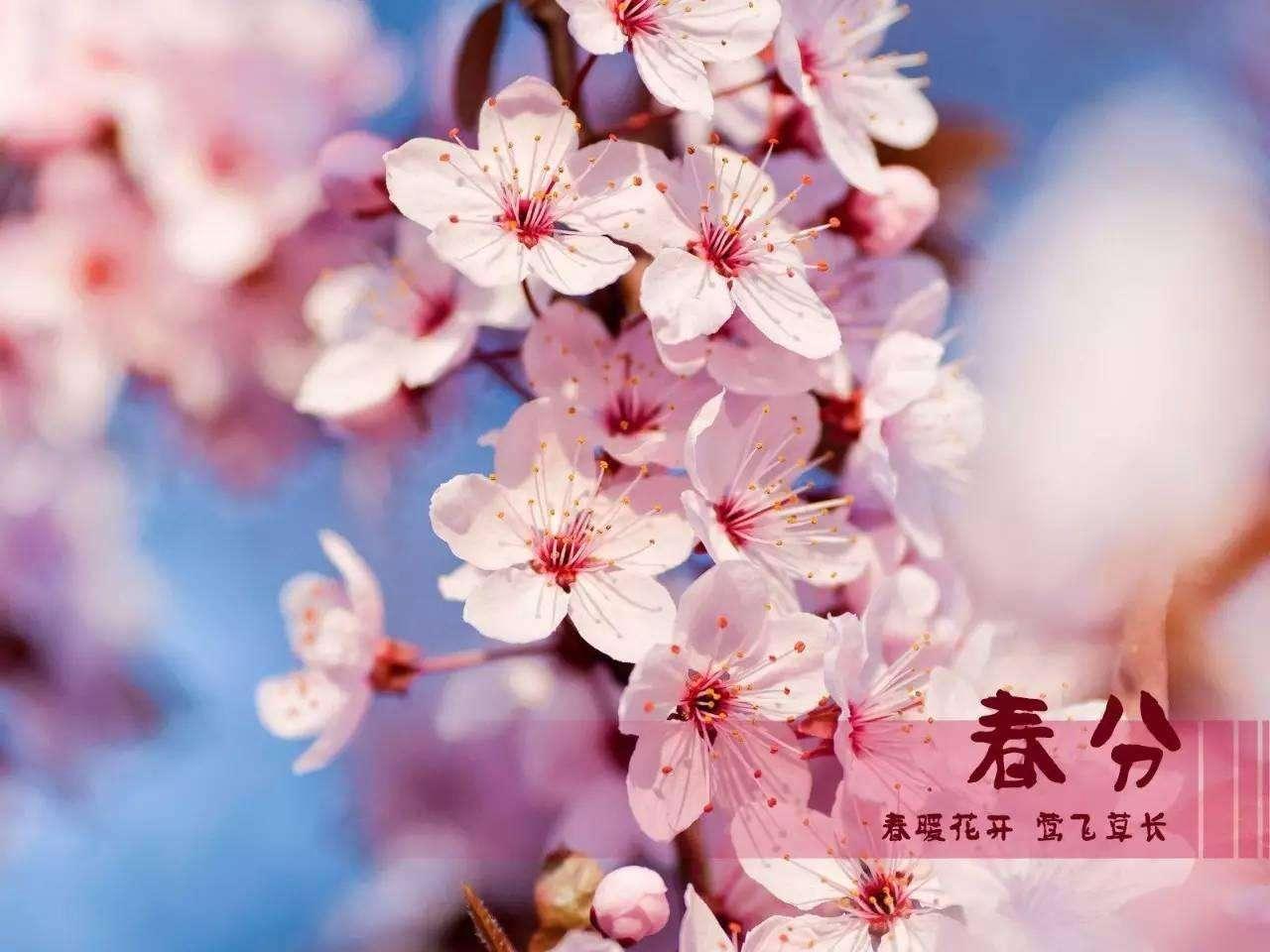 2019春分节气养生祝福语发朋友圈的暖心问候说说大全