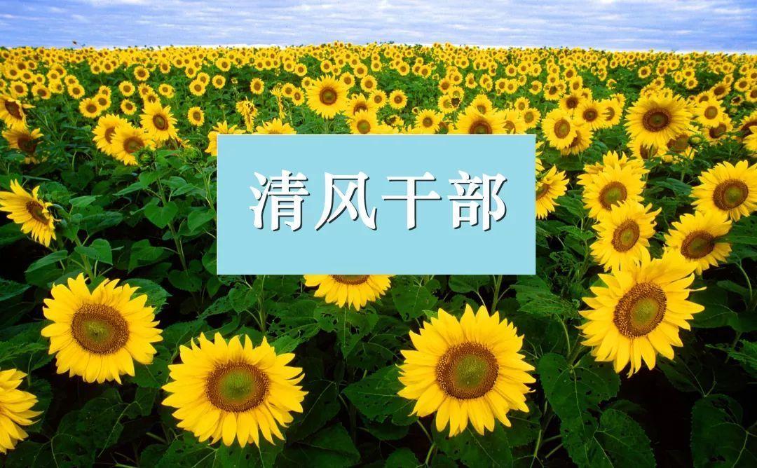 清风干部王埃先进典型事迹材料宣传