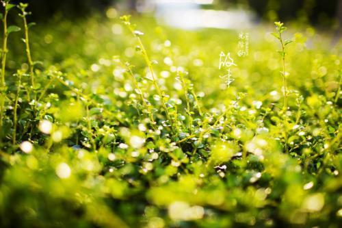 让青春之花绽放在农村大地上主题征文稿2400字