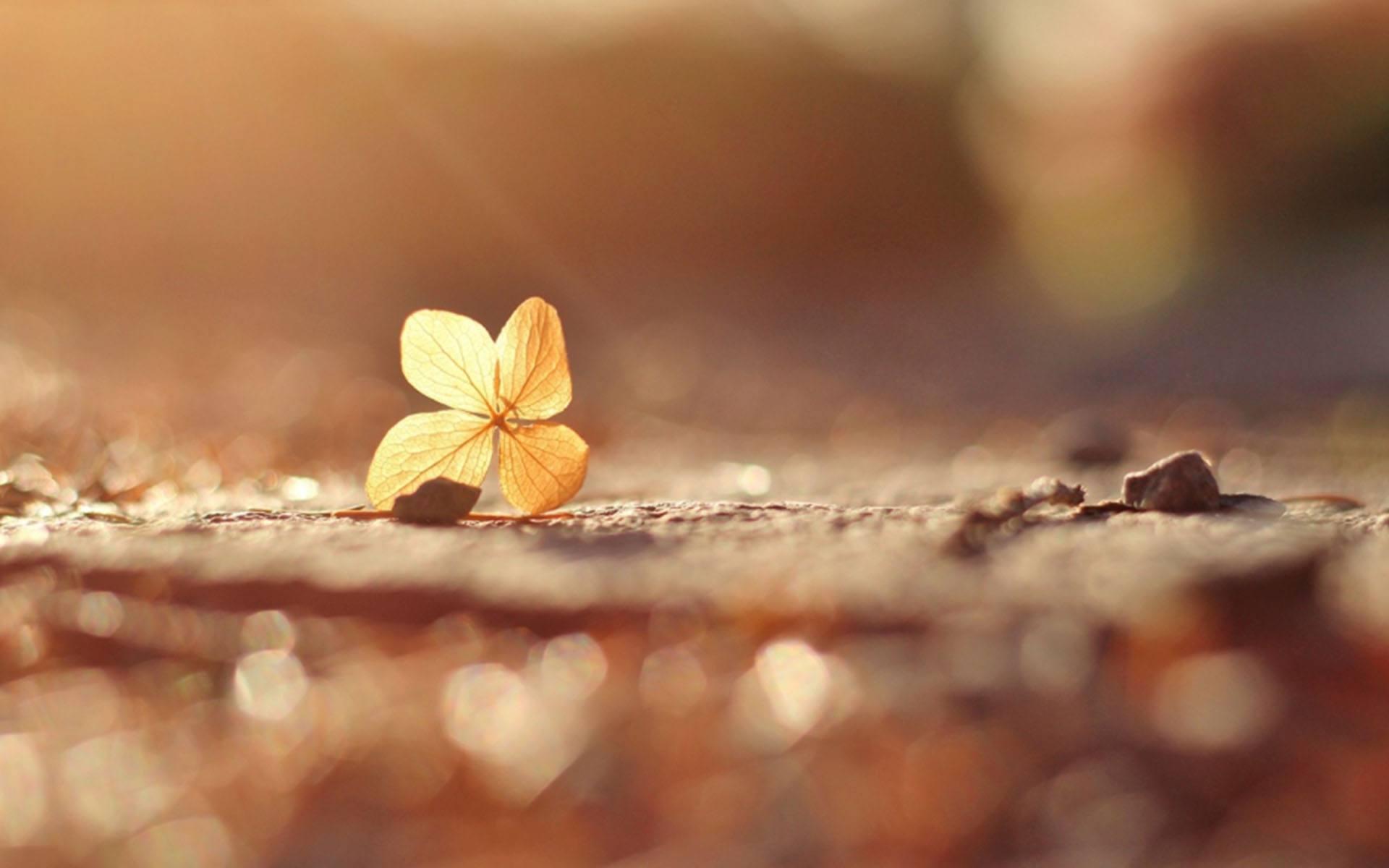 坚持向前走不回头的成长语录说说心情短句精选