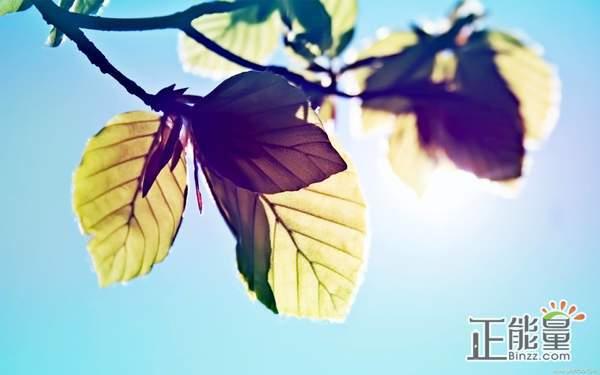 感受春天美好的文章欣赏:真正的春天,心灵的家园